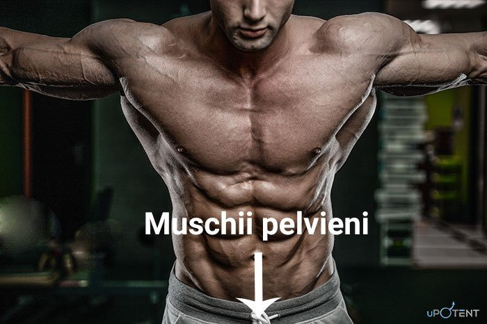 Muschii pelvieni la barbati